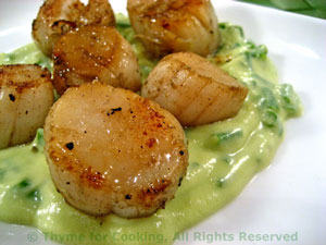 Scallops with Avocado Sauce